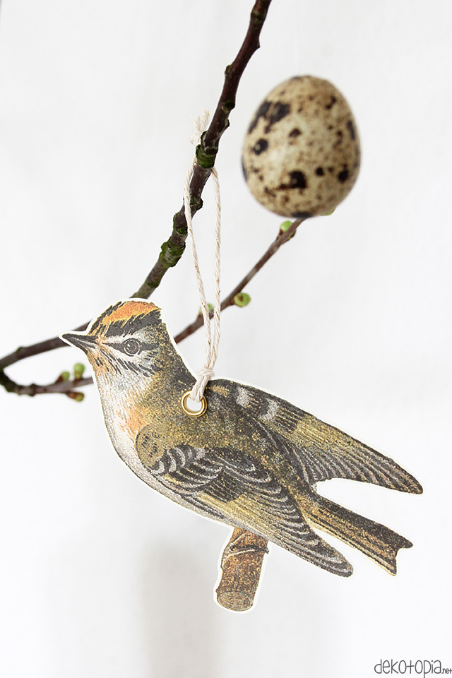 vogelanhaenger15