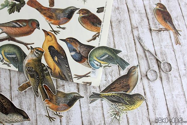 vogelanhaenger3