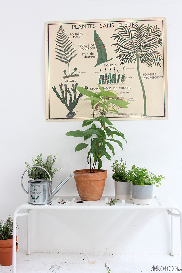 Plants are Friends: Statement Giesskanne